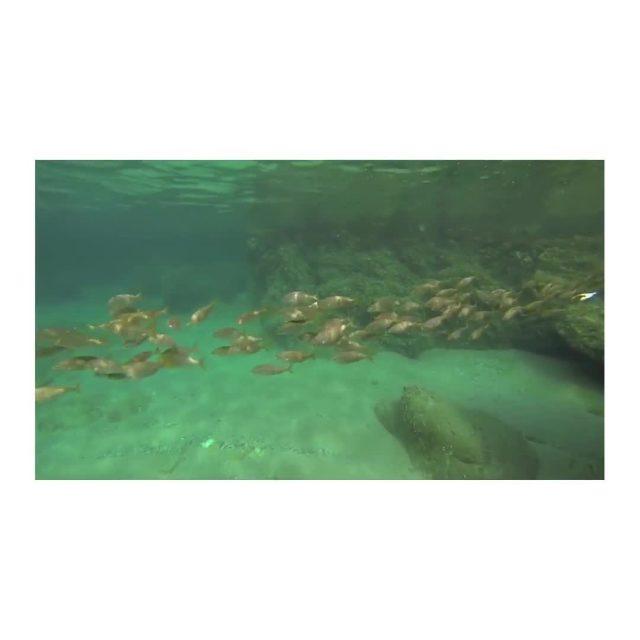 Hace cuatro años me aficioné a salir a nadar en grupo a mar abierto. Para mi es una de las actividades más bonitas que he realizado, te permite contemplar la fauna marina y al mismo tiempo, al estar en contacto con el agua y en silencio, se convierte en una práctica mindfulness.  Quise incluir ésta actividad en Vívete, para que el grupo  pudiese tener la oportunidad de vivir y sentir todos sus beneficios. No hacía falta ser nadadoras expertas. Junto a Cira @cormoranswim, experta en natación y conocedora de la zona, escogimos recorridos seguros y alcanzables para todas.  Esta imagen fue uno de los magníficos momentos que el mar nos regaló.  Ese recuerdo ya forma parte de nuestra vivencia.  Experiencia Vívete Begur    #marmediterraneo #mediterraneo  #costabrava #natacion #marabierto #nadar #momentoinolvidable#mindfulness #vacacionesdiferentes #unveranodiferente #autoconocimiento #bienestar #naturaleza #desconexion #begur #senstories #mysenstories #bienestarnatural #healthyliving #mindfulness #consciencia #meditacion #vacacionesdiferentes #openwater#experiencias#retiro#autoconocimiento #crecimientopersonal 